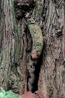 tronco-pisello